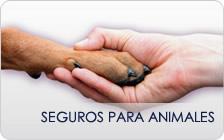 Seguros para Animales