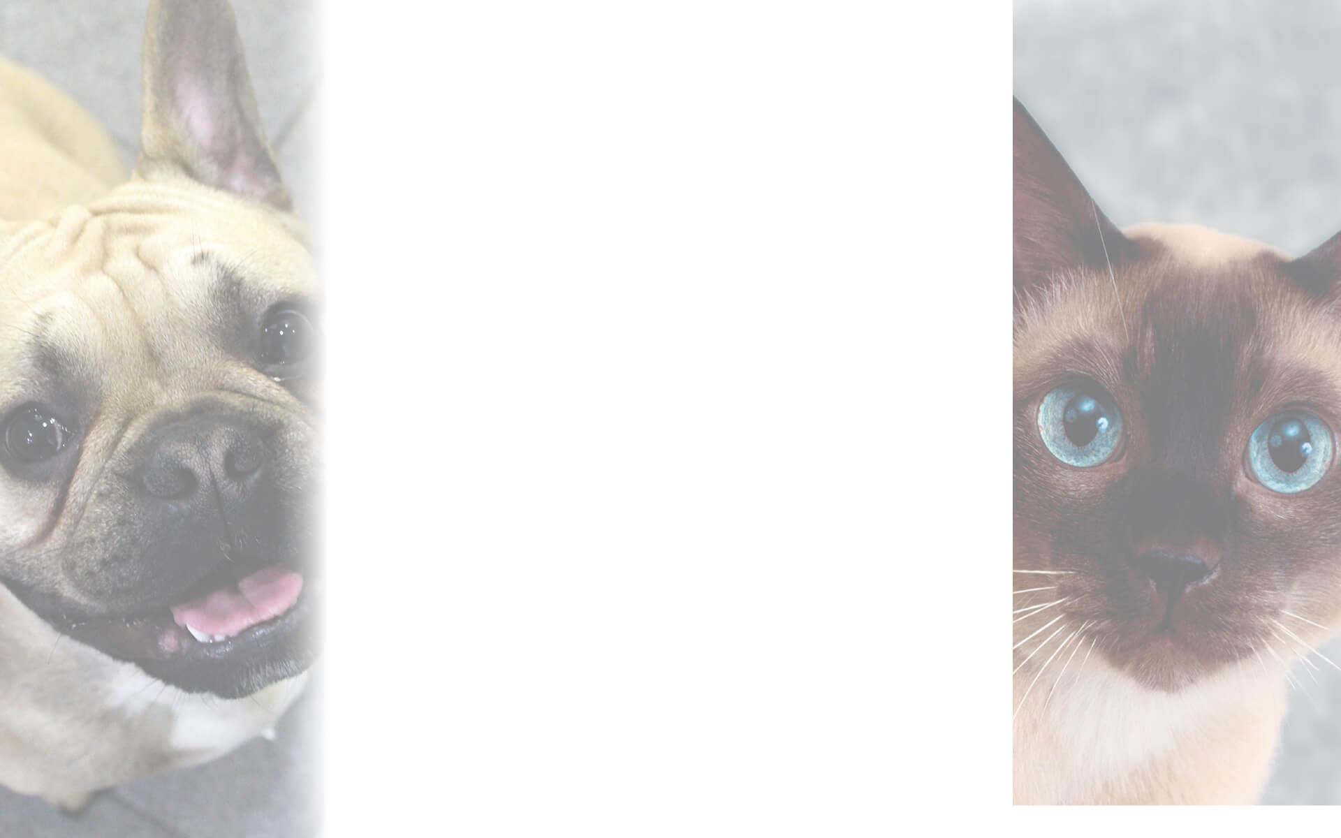 Sus Mascotas atentos en la Clínica Veterinaria Eurovet