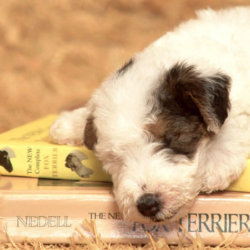 clases_para_cachorros_educacion_canina_1_full