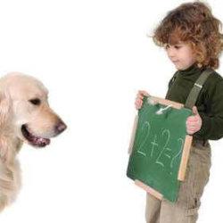 clases_para_cachorros_educacion_canina_2_full