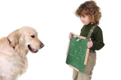Classes Pour Chiots