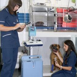 hospitalizacion_perros_hospitalizados_ana_y_bea