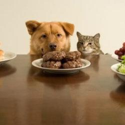 otros_servicios_medicos_nutricion_animal_full