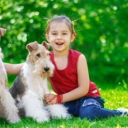 The little girl with two dogs of breed fox terrier on a green lawn