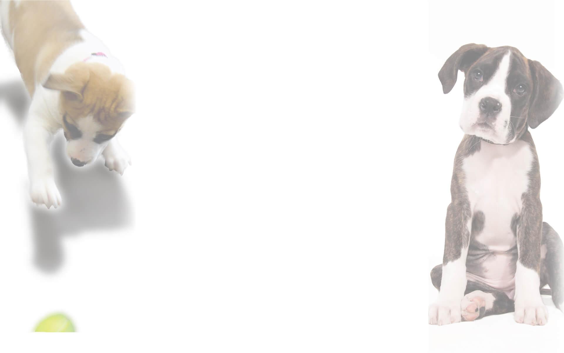 Cachorros en la clínica veterinaria Eurovet