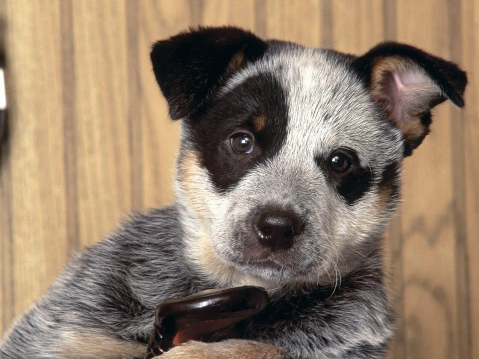Vétérinaire-Peniscola_Eurovet-Blog-Cinq_Sens