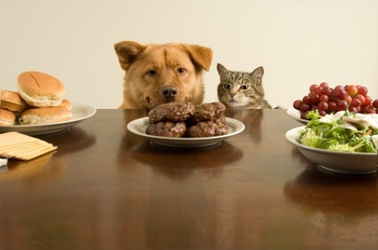 Alimentación: Las Mascotas También Sufren De Anorexia Y Bulimia