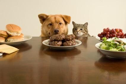 Tierarzt-Peniscola_Eurovet-Blog-Hungrige_Tiere