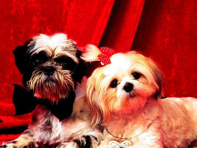 Cuidados Caninos: Mimar A Su Mascota