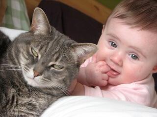 Tierarzt-Peniscola_Eurovet-Blog-Baby_mit_Katze