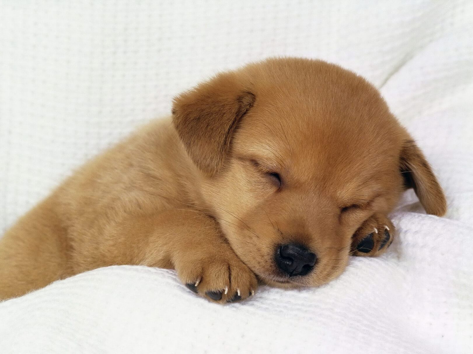 Veterinarian-Peniscola_Eurovet-Blog-Sleeping_Puppy