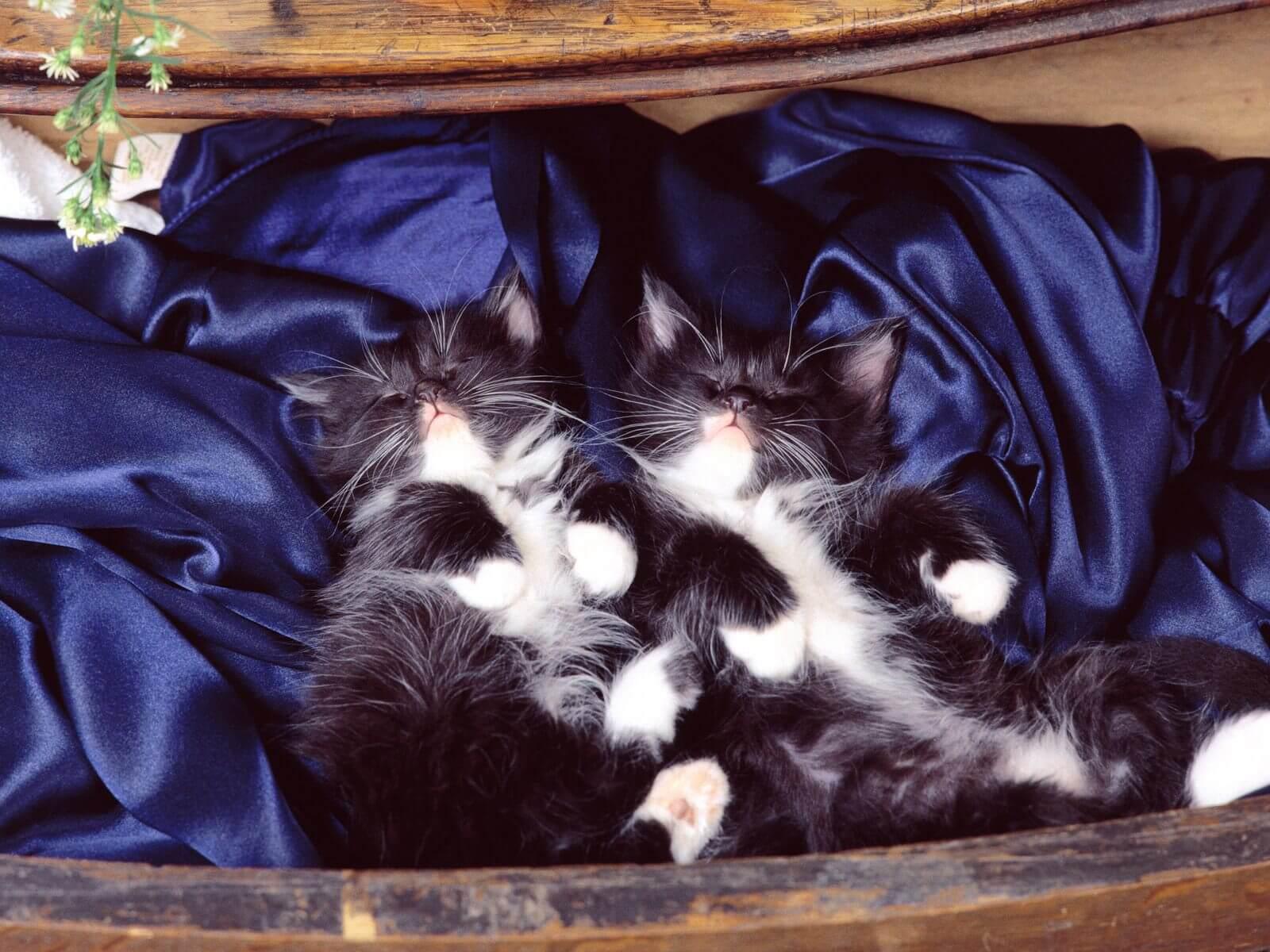 Katze Glücklichkeit Test: Meine Katze Ist Sie Glücklich ?