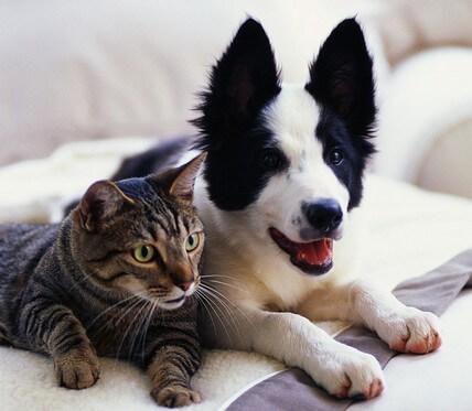 Nueva Mascota En Casa: Elegir Entre Perros Y Gatos