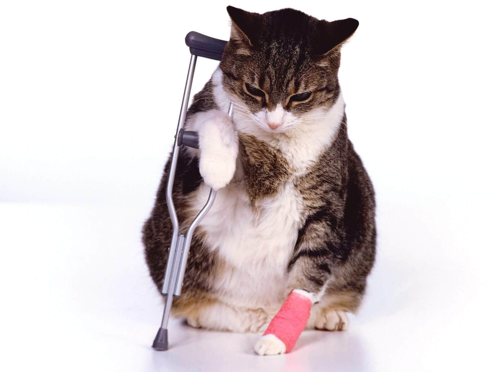 Asegurar La Salud De Sus Mascotas
