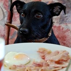 Vétérinaire-Peniscola_Eurovet-Blog-Chien_Gourmet