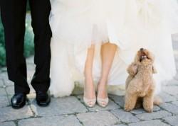 Tierarzt-Peniscola_Eurovet-Blog-Eifersüchtiger_Hund