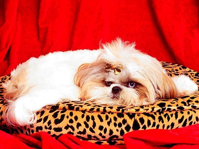 Entender Mejor El Comportamiento De Su Perro