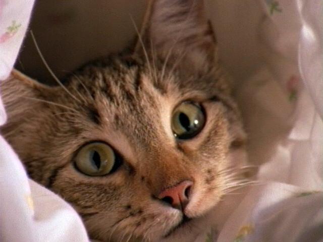 Votre Chat Vous Parle à Sa Façon