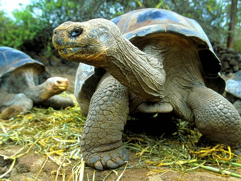 The Extending Sleep Of Tortoises