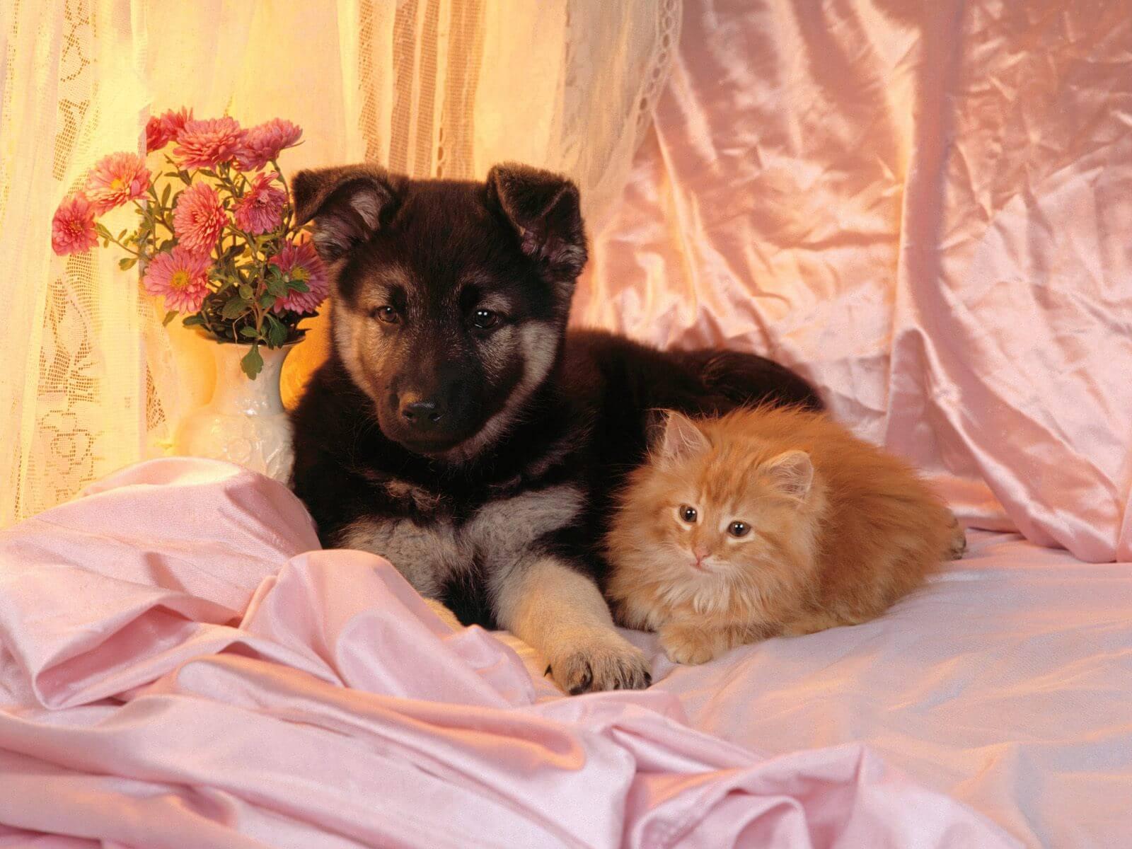 Die Unabhängigkeit Der Haustieren