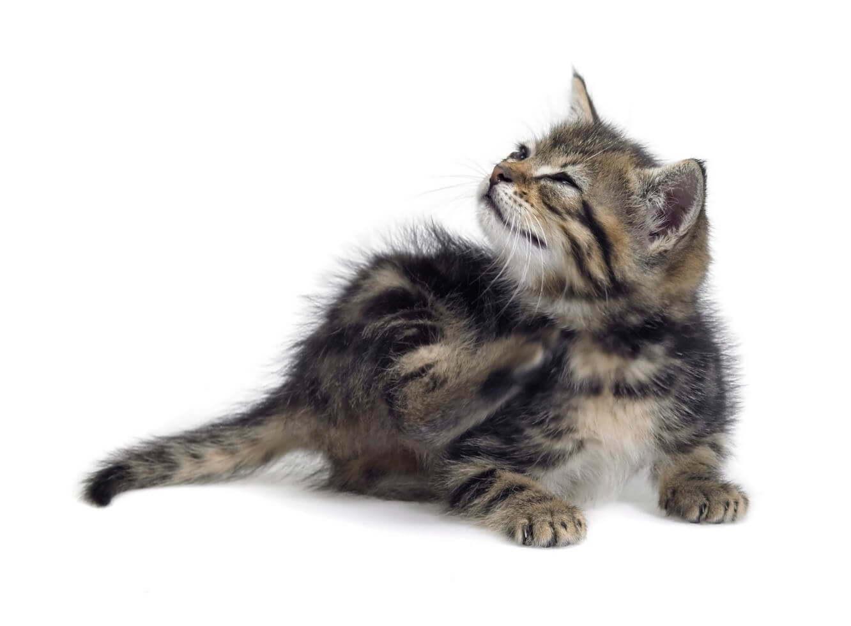 Tierarzt-Peniscola_Eurovet-Blog-Externen-Parasiten
