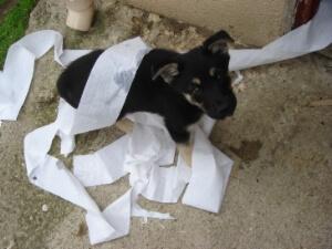 Consejos Sobre Los Perros Perturbadores