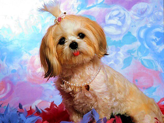 Hunde Tierpflege: Das Waschen Ihres Hund