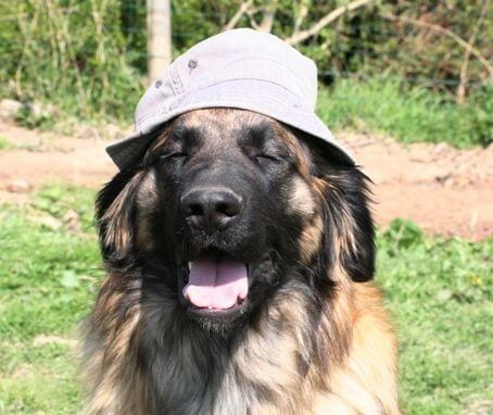 Vétérinaire-Peniscola_Eurovet-Blog-Danger
