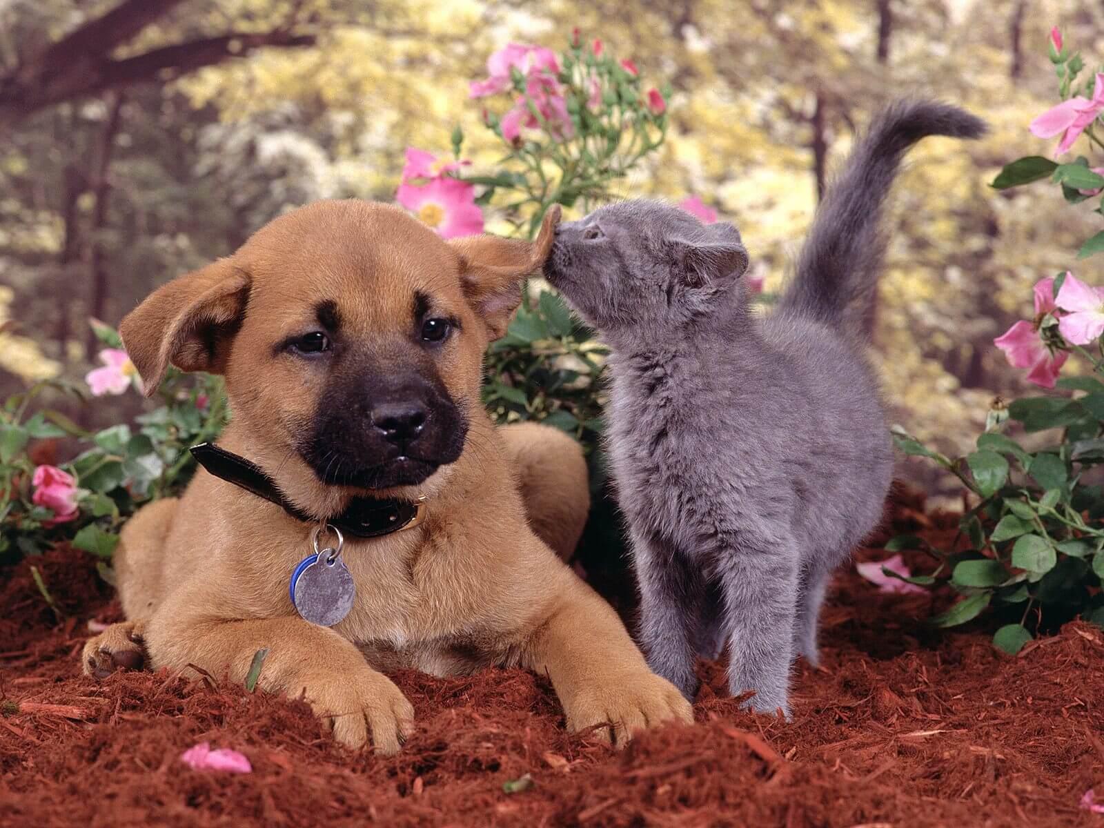 Vétérinaire-Peniscola_Eurovet-Blog-Relation_Chien_Chat