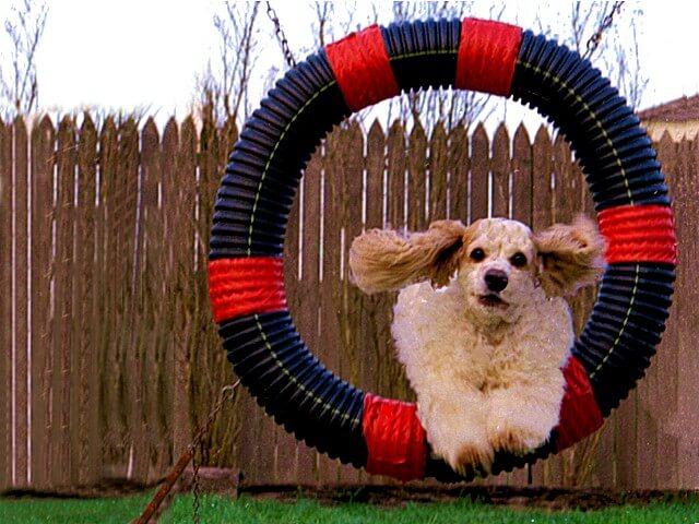 Mit Ihren Haustieren Sport Machen
