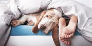 Clinique-Eurovet-Dormir-avec-son-chien