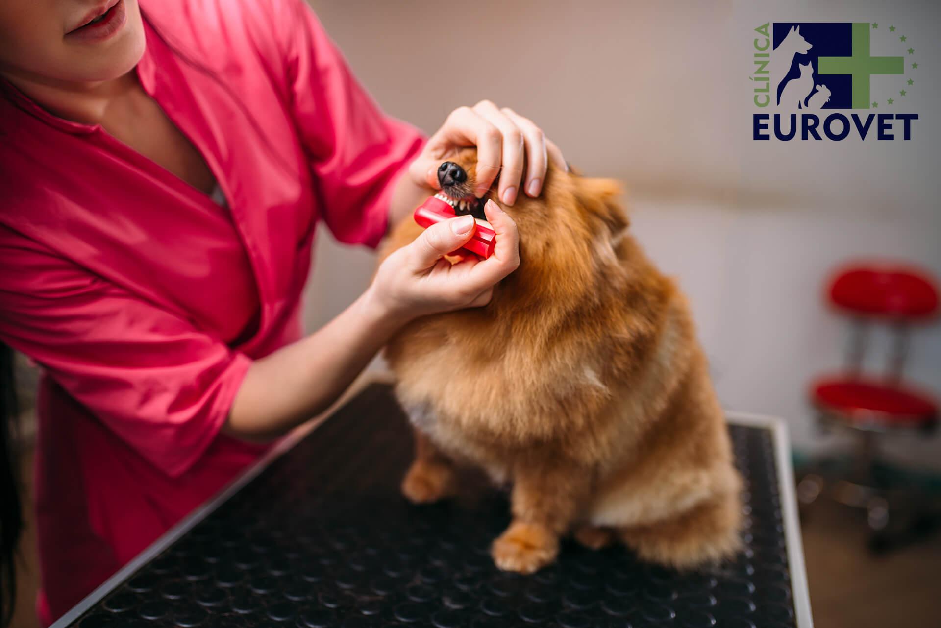 veterinaria eurovet peniscola