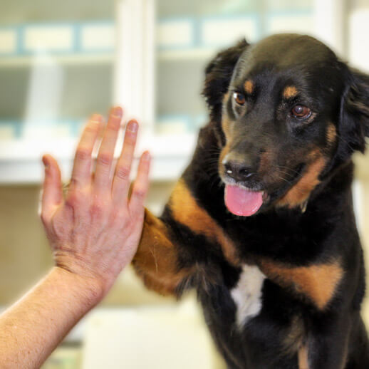 Clinica Veterinaria Eurovet Peñiscola Clases Cachorros
