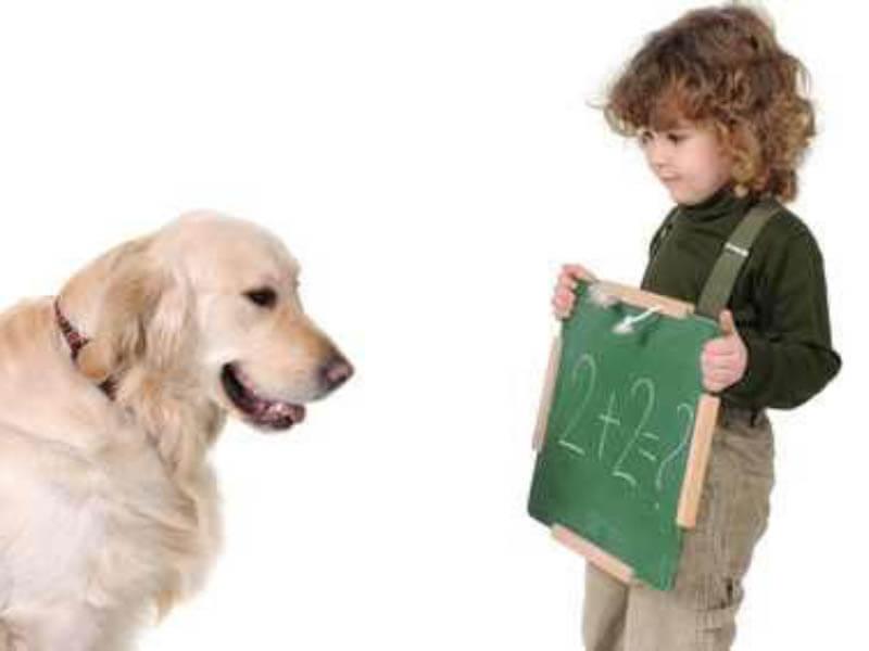 Clases para cachorros