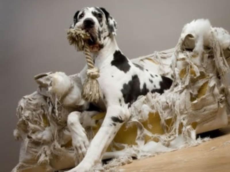 Comportamiento mascotas