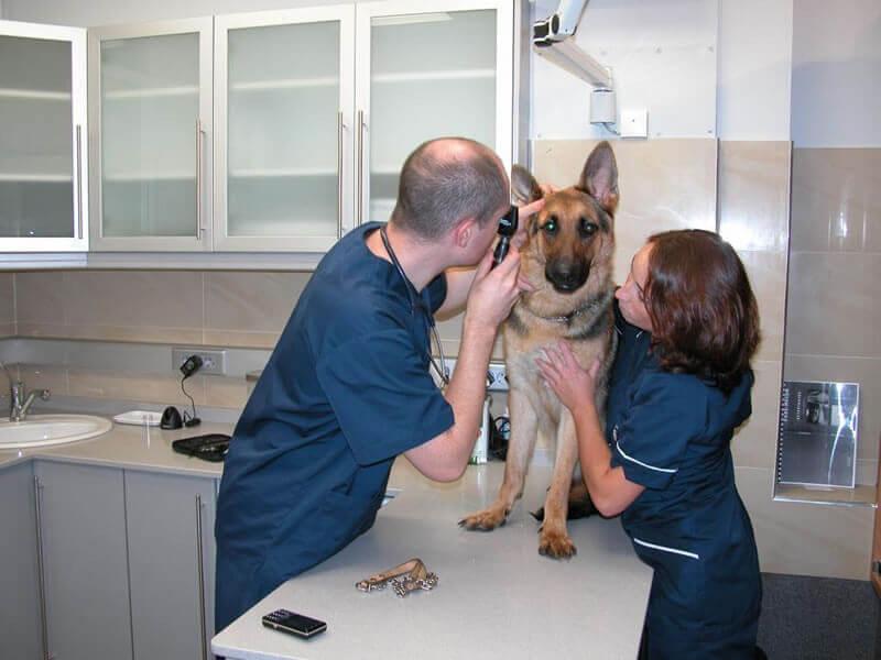 Consulta Perros y Gatos