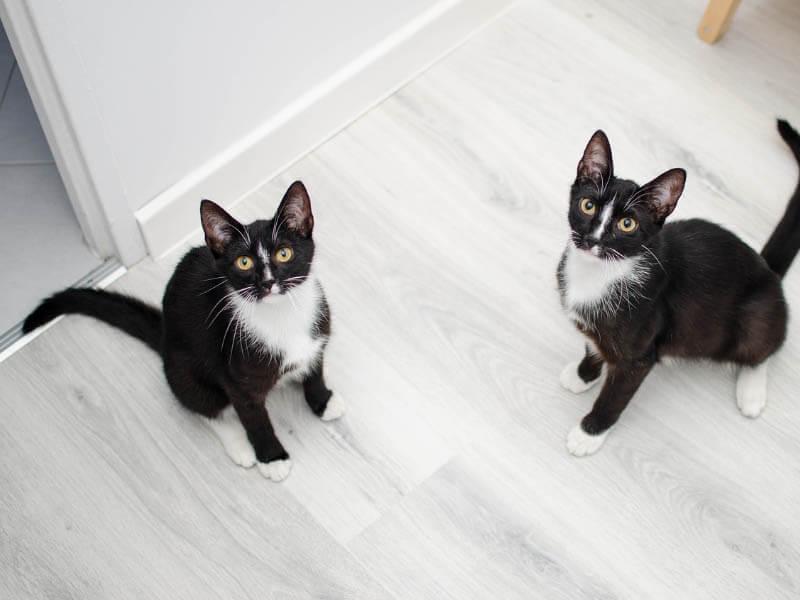 Guardería a domicilio para gatos