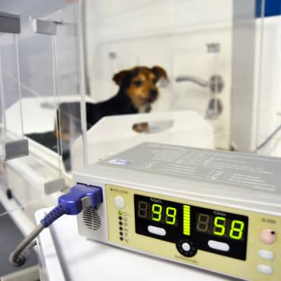 Clinica Veterinaria Eurovet Peñiscola Hospitalización